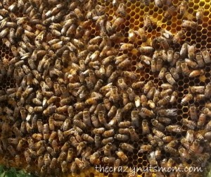 Learn how we bee keep. |eattravellife.com