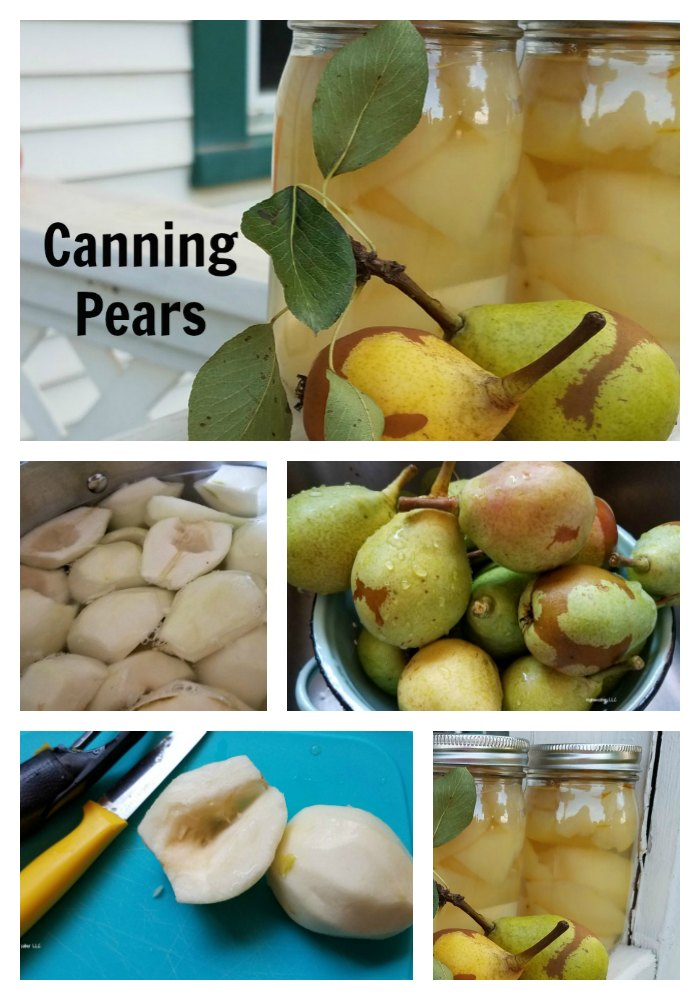 Wondering what to do with all your pears? Why no can pears. Canning pears is pretty easy . - eattravellife.com