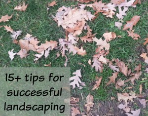 15+ tips for successful landscaping