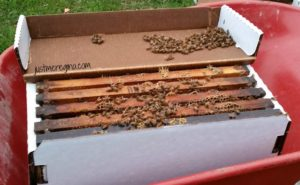 Bee Keeping: our journey to bee survival