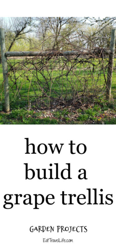 To get the most yield from your grapes, they should be supported by a trellis. This keeps the grapes off the ground. Learn how to build your own trellis.