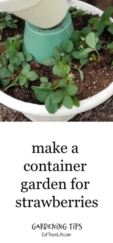 Only have a small space or want to keep the weeds out of your strawberry garden, you can make a container garden for your strawberries.