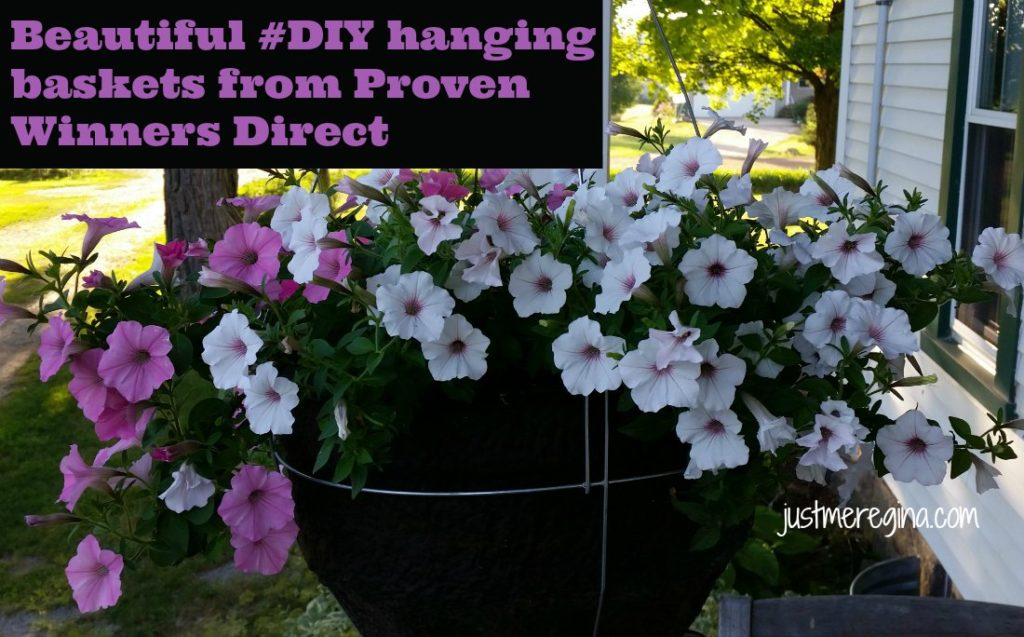 #ad Get your hanging basket from Proven Winner and have beautiful flowers all Summer long. Beautiful gardening ideas. | eattravellife.com