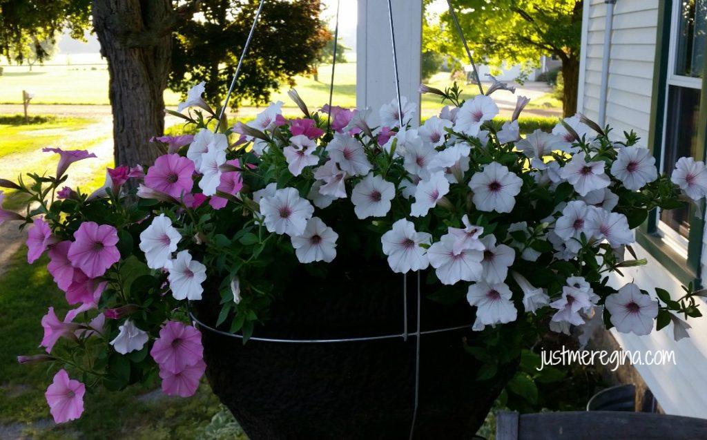#ad Get your hanging basket from Proven Winner and have beautiful flowers all Summer long. | eattravellife.com