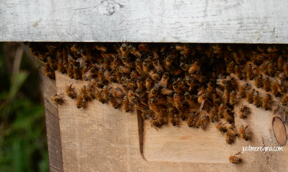 Tips to prepare your honey bees for the winter - eattravellife.com