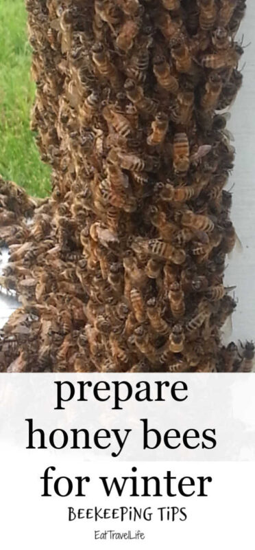 We have honey bees and they sometimes struggle to survive the cold winter months. Check out these tips we have learned to have them have a chance at surviving the winter.