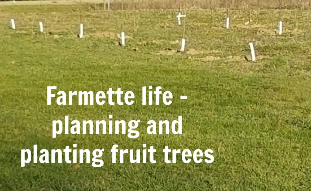 Planting fruit trees requires a little planning and thought. We share our selection process and tips on what to do.
