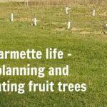 Plantingfruittreesrequiresalittleplanningandthought.Weshareourselectionprocessandtipsonwhattodo. JustMeRegina.com