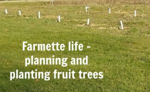 Farmette life: planting fruit trees