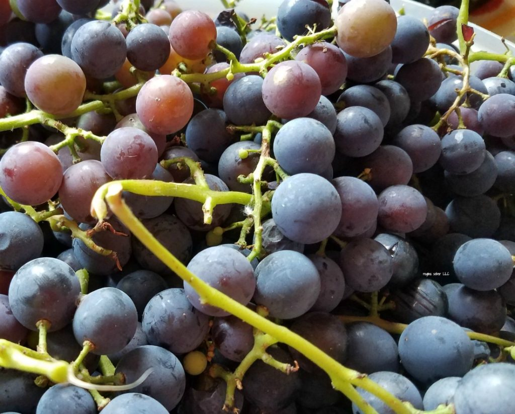 A simple way to can grape juice. Not time consuming and it's delicious. - eattravellife.com