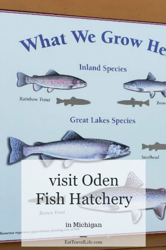 Ever toured a fishing hatchery? That's fish farmi!? Michigan's DNR has made it easy for you to come visit offering free tours at their 6 hatcheries.