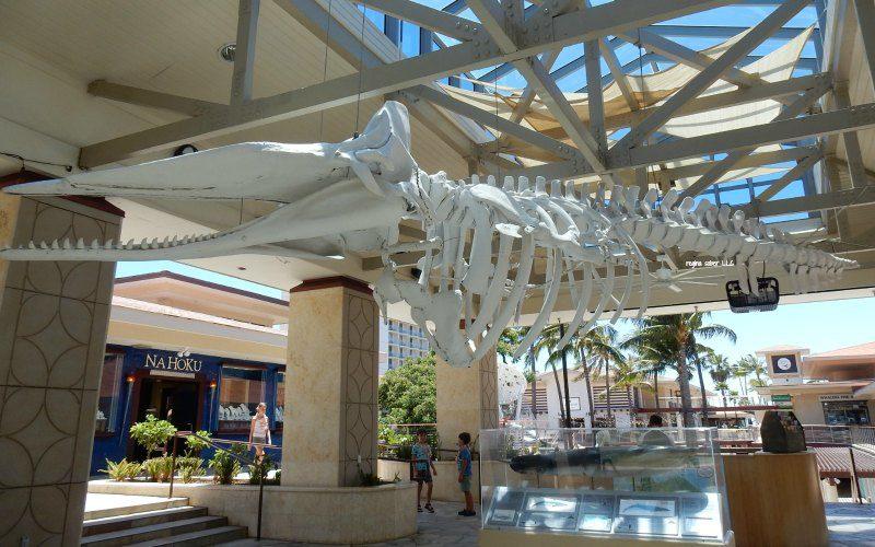 kannapoli whale skeleton