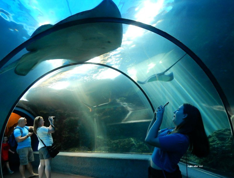 how to plan an awesome vacation - maui ocean center hawaii