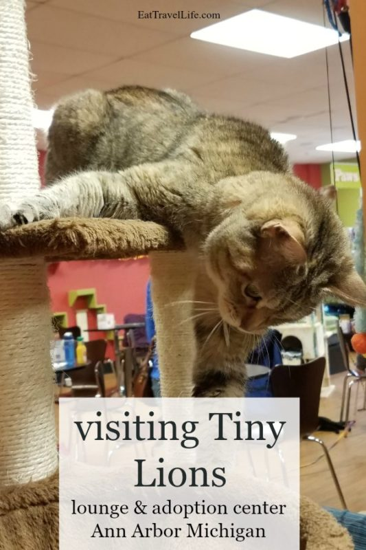 Wanna little cat therapy without owning one? Looking to adopt a cat? Head to Tiny Lions in Ann Arbor. The purrrfect place to see cats and get a cat to adopt..