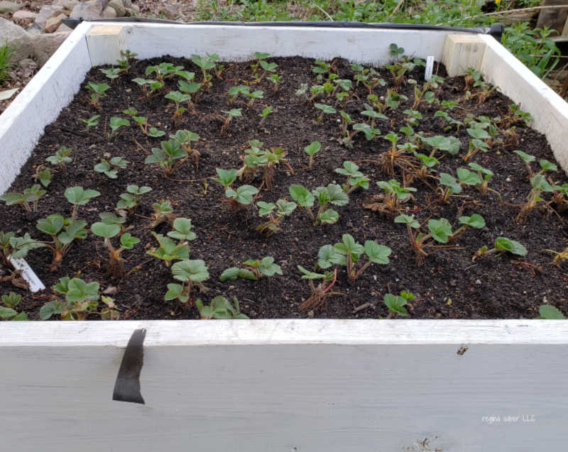 elevated raised bed