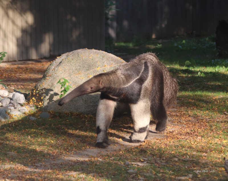 ant eater lansing