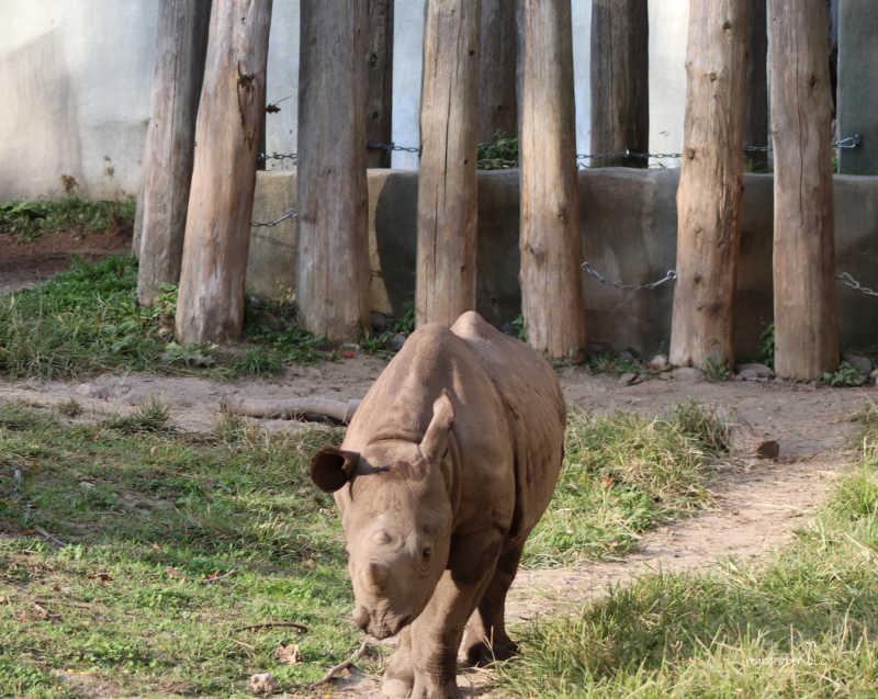 rhino potter park zoo lansing