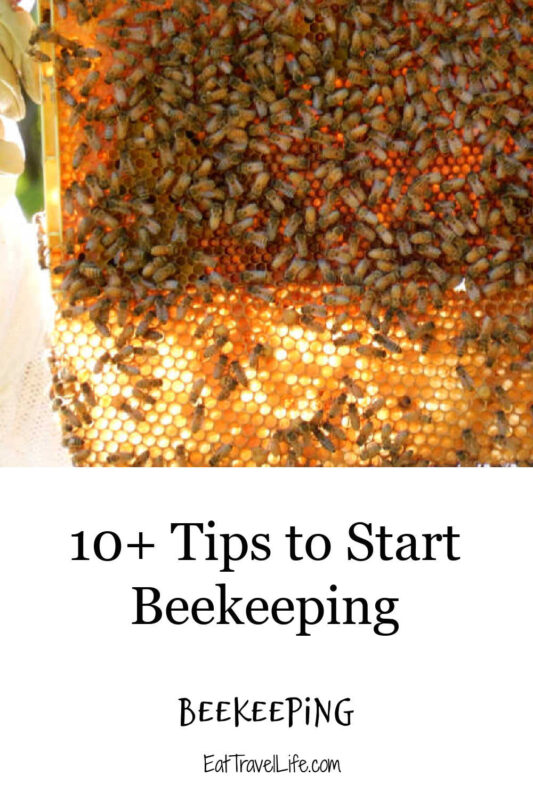 Are you interested in beekeeping? We have 10 detailed tips to help you consider before you start beekeeping.