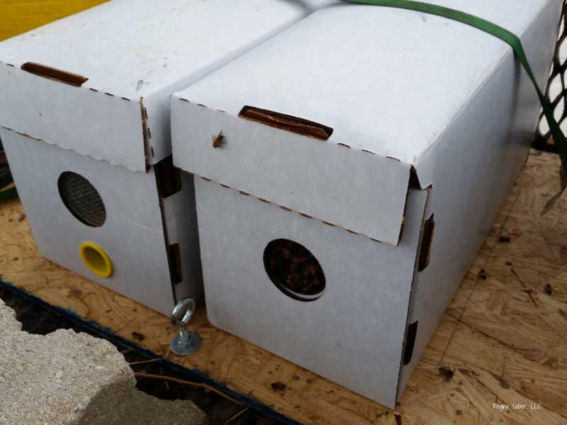 nuc honey bees to start beekeeping